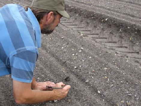 A talajtömörödés miatt kisebb hozam várható! Vizsgálati eredmények és tippek a taposás kivédésére