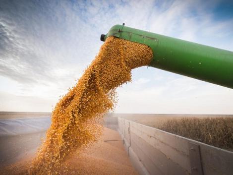 Kitalálod, hogy mi a magas kukorica terméshozam egyik fő ellensége?
