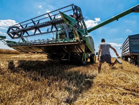 Hat tonna feletti a búza termésátlaga Tolnában