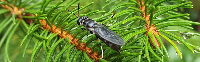 rovar mint fehérjeforrás