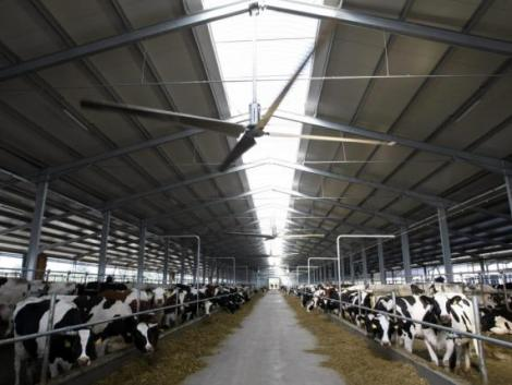 Ingyenes segítséget kapnak az állattartók a fertőzések megelőzésében