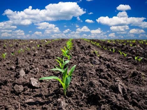 Felkészültünk az extra kukorica-vetésterületre és akciós árakkal indítunk! – VIDEÓ