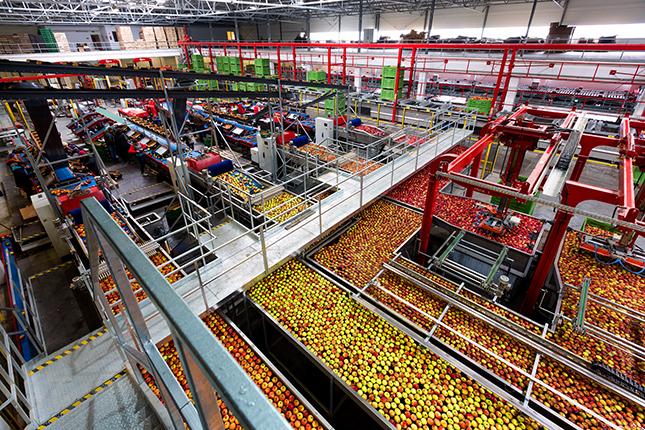 alma az almaválogató üzemben