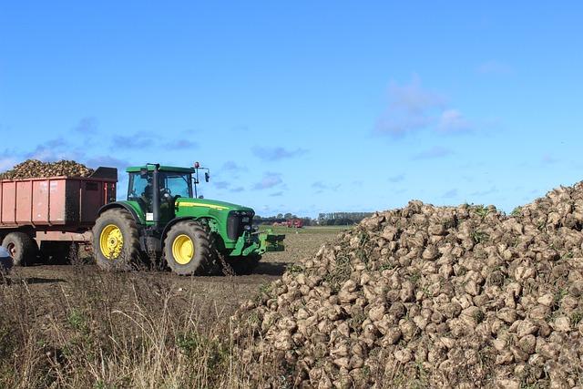 A brit gazdák aggódnak a cukorrépatermés miatt.