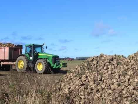 A betiltott növényvédő szerek nélkül befellegzett a cukorrépa-termesztésnek?