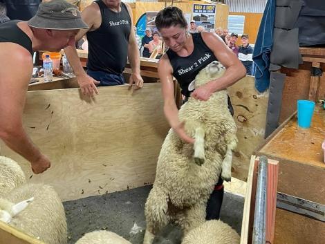 Világrekord: 9 óra alatt 661 bárányt nyírt meg egy fiatal lány – KÉPEK!