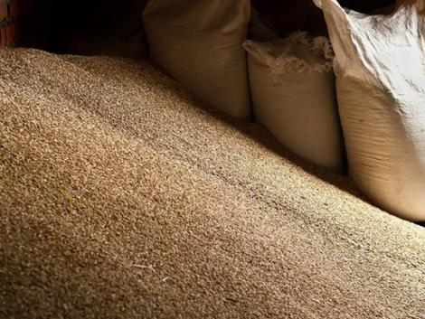 Az orosz gabonaexport szabályozása kihat a világkereskedelemre