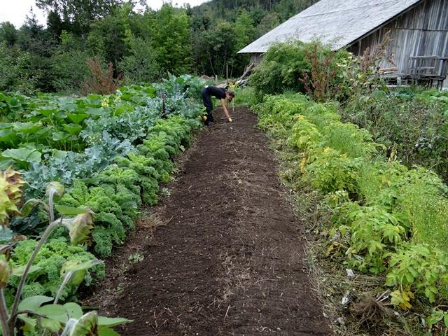 veteményes kert, kertészkedés