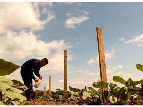 Ezekre figyelj, hogy elérd a napraforgód maximális termésmennyiségét! – VIDEÓ