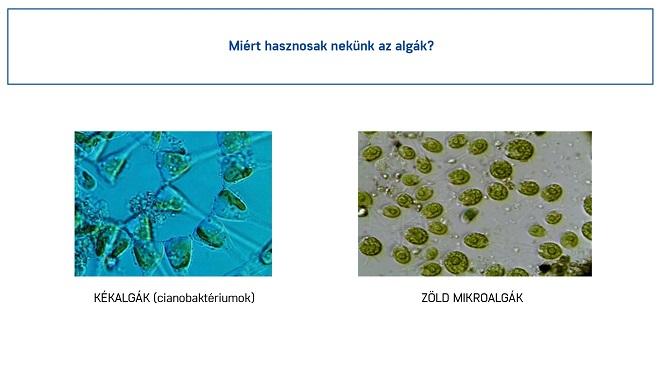 alga felhasználása a mezőgazdaságban