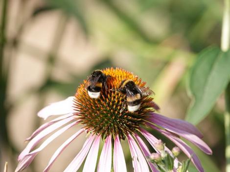 """Újabb bizonyíték a méhek """"szuperképességeire"""""""