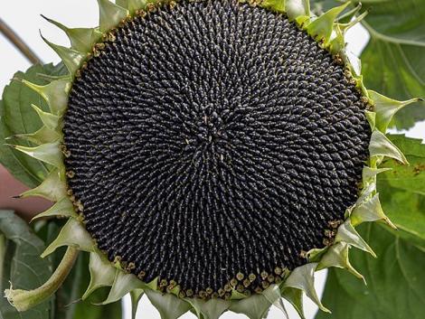 A pénztárcánknak és a növénynek is jót tesz: Folyékony Kénpótlás nitrogénoldattal egy menetben!