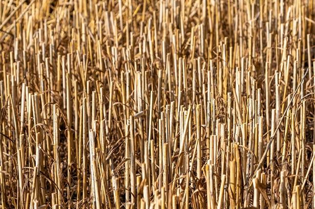 Az aratás utáni tarlóégetésre is csak kivételes esetekben van lehetőség.
