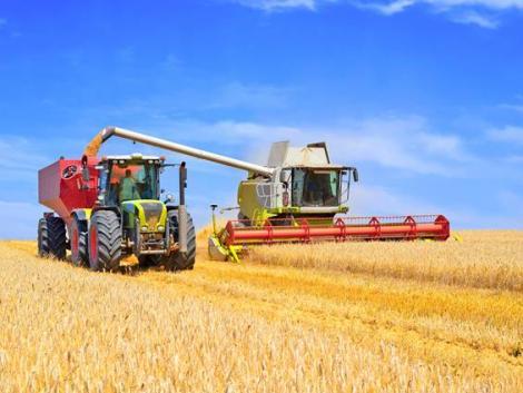 Ötéves csúcson a gabonaárak – mennyit éreznek ebből a termelők?