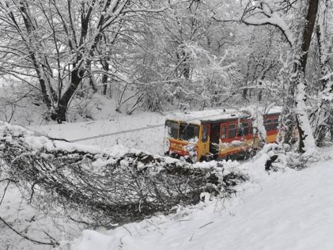 Fák dőltek ki a hó súlya miatt Borsodban – KÉPEK