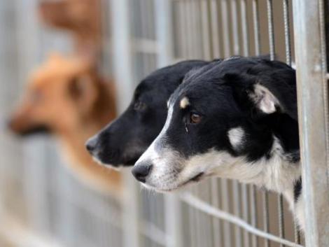 Nagy lépés az állatvédelemben! Megalakult az Állatvédelmi Központ