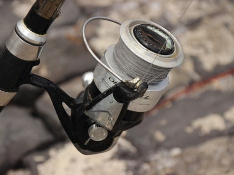 Felelőtlen horgászok veszélyeztetik a vízimadarakat