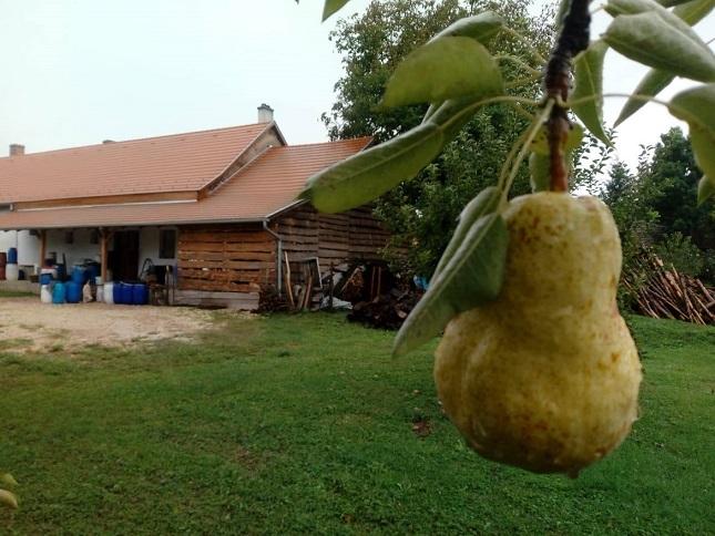 Egészséges gyümölcsből készül a legjobb pálinka.