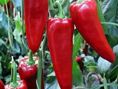 Új vezetés a Rijk Zwaan zöldségnemesítő vállalat élén