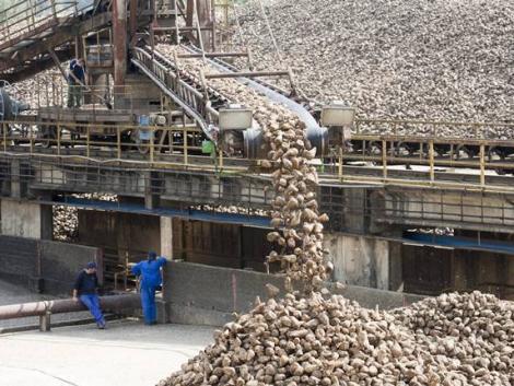 Keserédes évet zártak a cukorrépa-termesztők