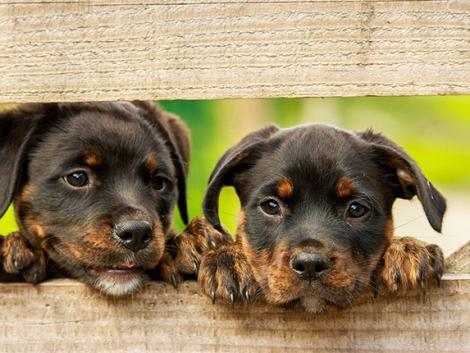 Fontos lépés az állatkínzó kutyaszaporítók visszaszorításáért