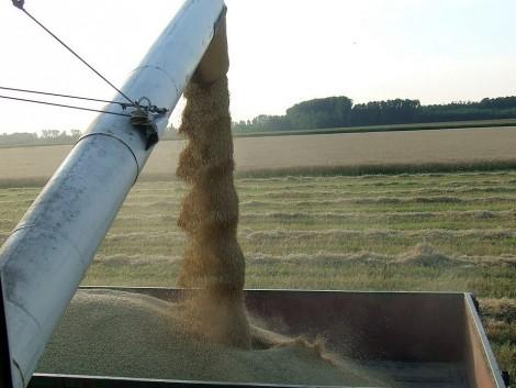 Az orosz gabonaexport lebonyolításában súlyos problémák vannak