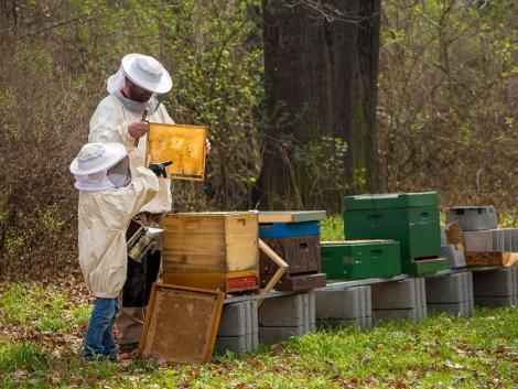 Méhészeti járművek – hamarosan igényelhető az átmeneti támogatás