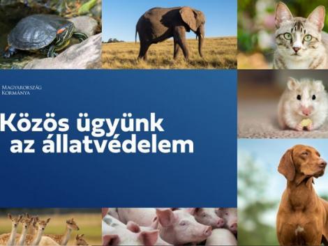 13 fontos kérdés az állatvédelemről! Töltsd ki Te is!
