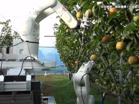 Villámgyors robottal reformálnák meg a gyümölcsszüretet a japánok – VIDEÓ