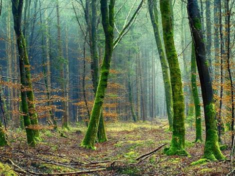 Tudod mekkora értéke van egy fának? Ezzel az applikációval kiszámolhatod!