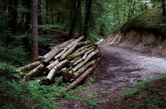 Az erdők szerepe óriási a biodiverzitás szempontjából.