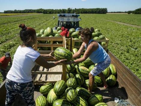 A gazdák tapasztalataira kíváncsi az EU – felmérés a tisztességtelen kereskedelmi gyakorlatokról