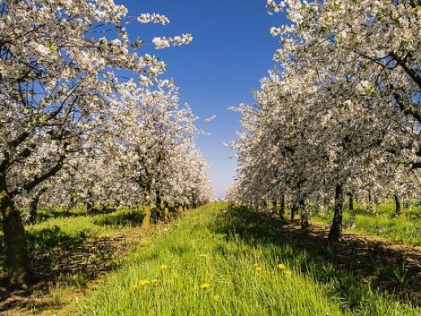 Gyümölcstermesztők figyelem! Április 20-án nyílik az új ültetvénytelepítési pályázat