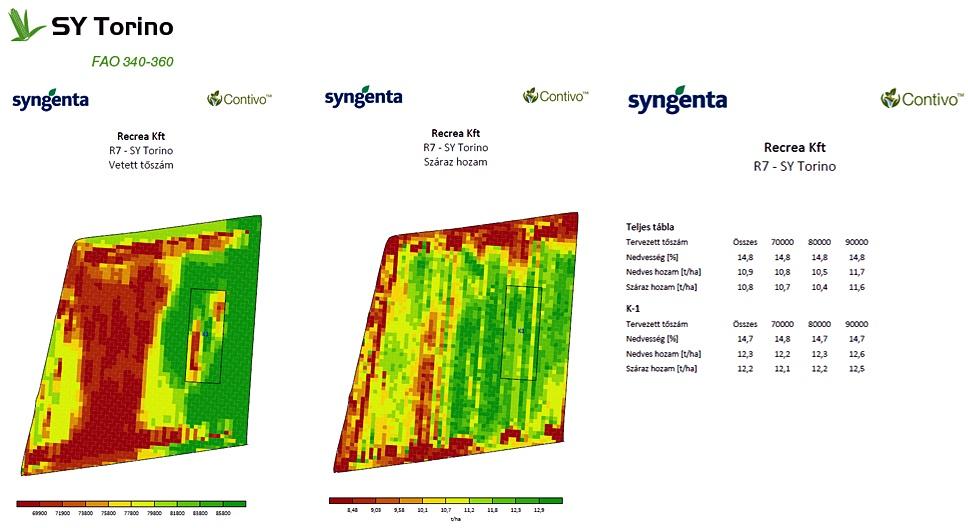 Syngenta kukorica vetőmag