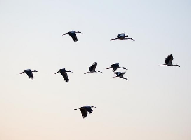 Emberre is átterjedt az A(H5N8) madárinfluenza