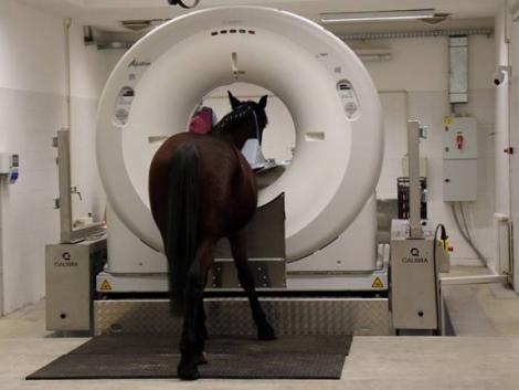 A világon csak 5 ilyen van – egyedülálló ló-CT készülék Magyarországon
