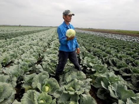 A vendéglátóipari beszállítókat is támogatná az agrárkamara