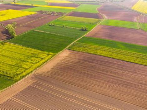 Termőföldbérlés: ezek a haszonbérleti díjak számítanak túlzónak