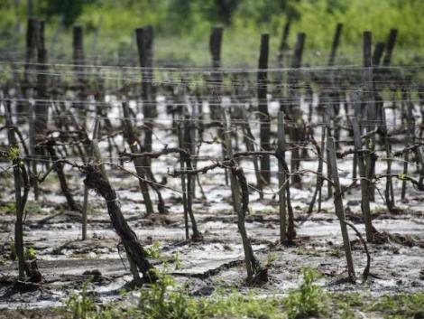 Még nem késő: így szerezhetsz pénzügyi védelmet a mezőgazdasági kockázatok ellen