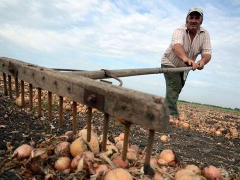 Új növényvédő szereket használhatnak a dinnye- és vöröshagyma-termesztők