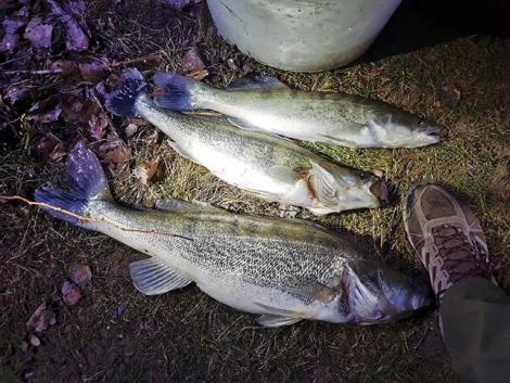 Sorhorgos orvhalászt fogtak a Peresi-holtágon