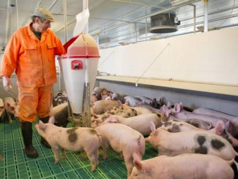 Lezárult a gigaprojekt – hatékonyabban termelhet sertéshúst Magyarország