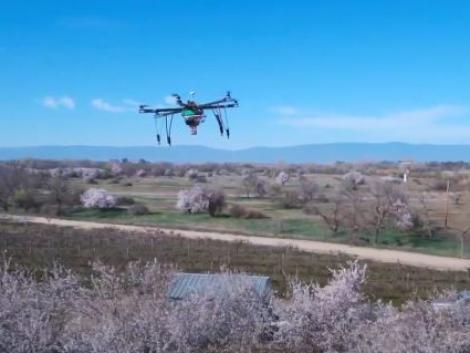 Ez a jövő? Méhek helyett drónok végzik a beporzást