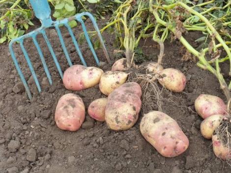 Potato Europe – burgonyatermesztési kiállítás
