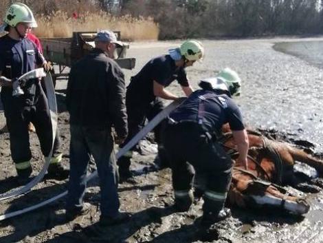 Lovaskocsival hajtott a tatai Öreg-tóba – a ló az iszapba ragadt