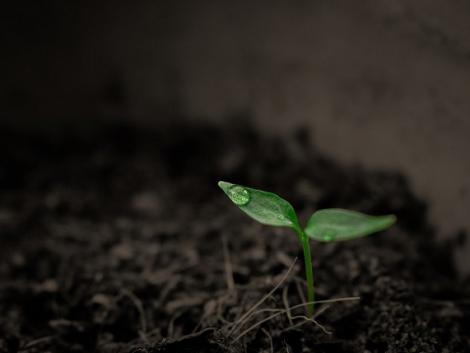 Ezek a bacik mindent kibírnak – Mostantól a legrosszabb körülmények sem gátolják a talajbaktérium-kijuttatást