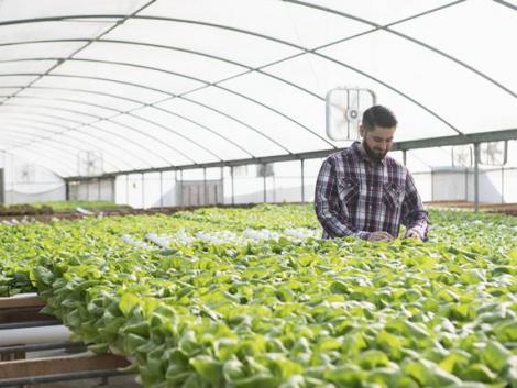 Fenntartható megoldásokkal segíti a gazdákat a BASF