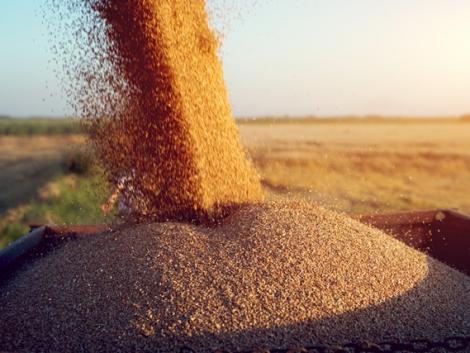 Hogyan lehet biztosítani a folyamatos élelmiszer-ellátást és élelmezésbiztonságot?