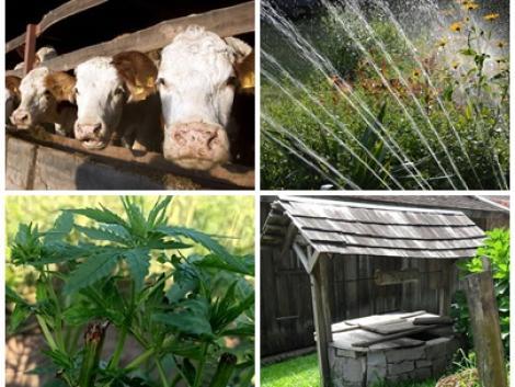 Ötletek öntözéshez, a járvány hatásai a mezőgazdaságra és egy csodanövény