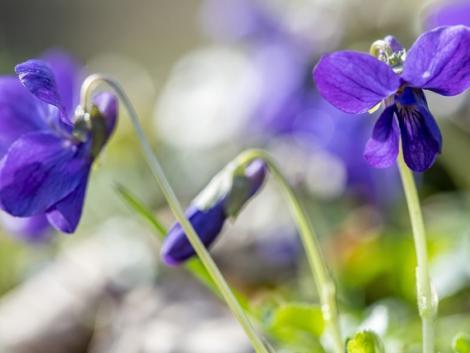 Lassan beköszönt a tavasz, jövő hét végétől enyhülés kezdődik